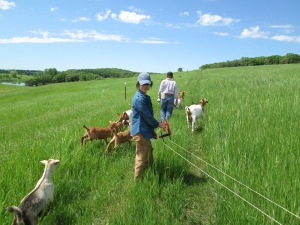 Participants in the June 15 Holistic Management of Goats Workshop at Paradox Farm learn to move and fence goat tribes.
